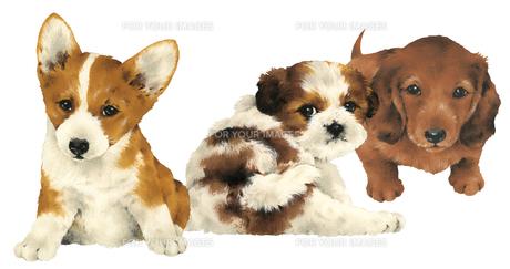 カワイイ犬の写真素材 [FYI00219641]