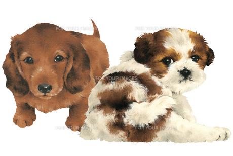 カワイイ犬の写真素材 [FYI00219653]