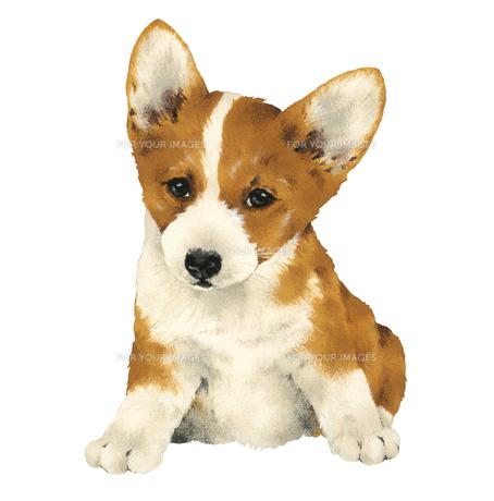 かわいい子犬の写真素材 [FYI00219677]