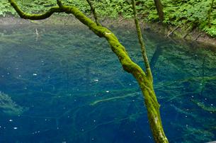 苔の生えた木と青池の写真素材 [FYI00219682]