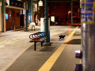 商店街の猫の写真素材 [FYI00219694]