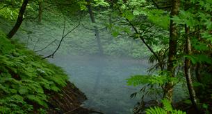 霞がかかる青池の写真素材 [FYI00219700]