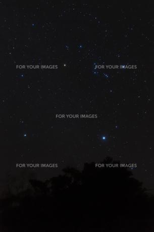 オリオン座の写真素材 [FYI00219916]