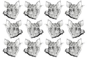 豚のイラストの写真素材 [FYI00219968]