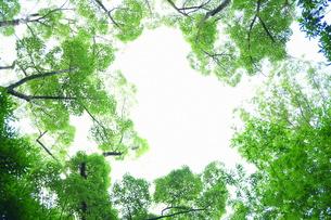 円形の木の写真素材 [FYI00220323]