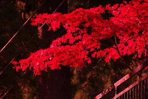 【丹沢:秋の風景】:紅葉:黄葉etc.の写真素材 [FYI00220474]