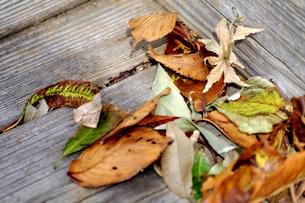 【里山の風景】公園の片隅の落ち葉の写真素材 [FYI00220532]