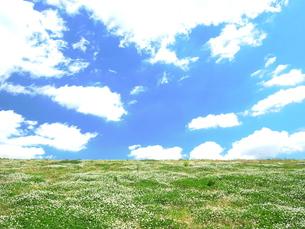 シロツメクサのある風景の写真素材 [FYI00220571]