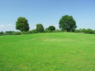 夏の草原の木々の写真素材 [FYI00220572]
