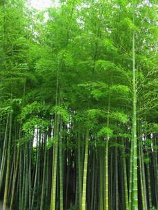 竹林の素材 [FYI00220589]