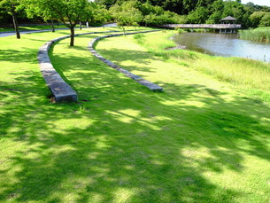 夏の公園風景の写真素材 [FYI00220684]