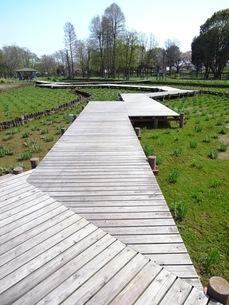 春の公園風景の写真素材 [FYI00220696]