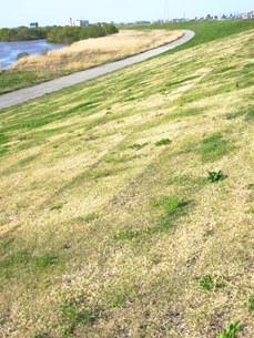 春の江戸川の土手の写真素材 [FYI00220797]