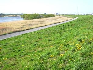 春の江戸川風景の写真素材 [FYI00220810]
