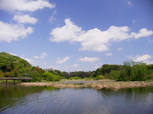 春の21世紀の森公園風景の写真素材 [FYI00221169]