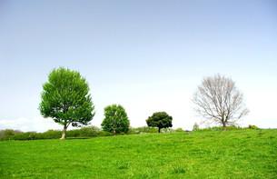 春の草原風景の写真素材 [FYI00221172]