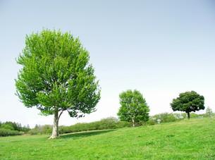 春の草原と立木の写真素材 [FYI00221202]