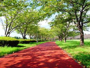 初秋のみさと公園風景の写真素材 [FYI00221291]