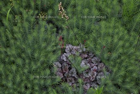 軽井沢レイクガーデン 花の写真素材 [FYI00221472]