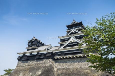 熊本城の写真素材 [FYI00222009]
