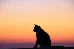 夕日に佇むネコの素材 [FYI00222032]