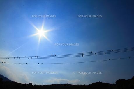 太陽と小鳥の楽譜の素材 [FYI00222037]