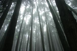 霧の素材 [FYI00222046]