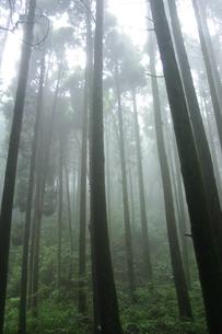 霧の素材 [FYI00222047]