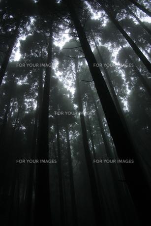 霧の素材 [FYI00222051]