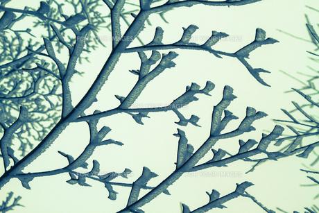 樹氷の素材 [FYI00222063]