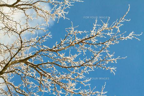 樹氷の素材 [FYI00222071]