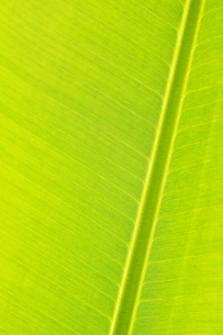 Green leafの写真素材 [FYI00222207]
