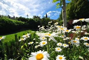 flowers of paradeの写真素材 [FYI00222374]