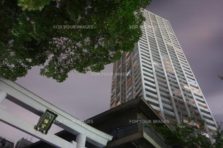神戸夜の鳥居とハイタワーマンションの写真素材 [FYI00222441]