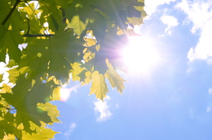 summer leavesの写真素材 [FYI00222498]