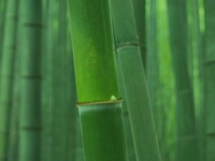 竹林の写真素材 [FYI00222529]