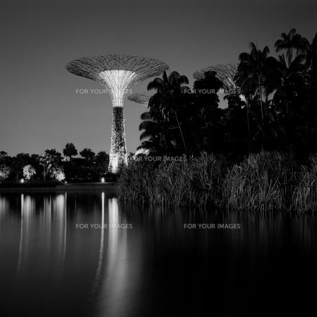 シンガポール 夜中の公園の写真素材 [FYI00222534]