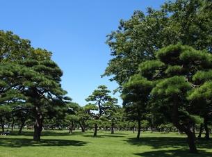 松林の写真素材 [FYI00222558]