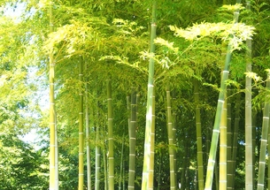 竹林の写真素材 [FYI00222559]