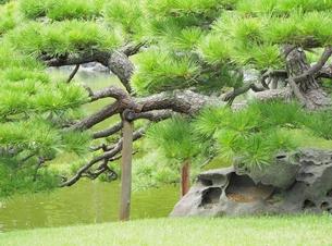 松の写真素材 [FYI00222586]