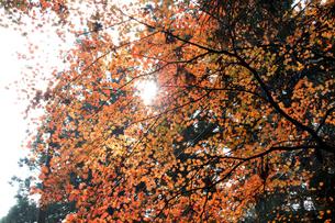 高野山奥の院・紅葉の写真素材 [FYI00222797]
