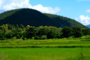 山と田んぼと木の素材 [FYI00222824]
