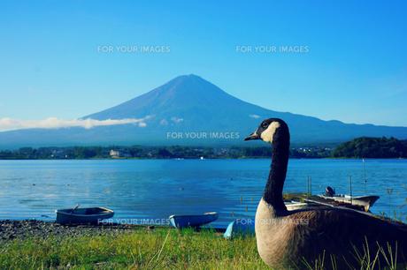富士山を見るの素材 [FYI00222952]