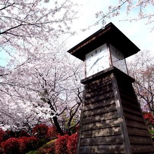 春の飛鳥山公園の写真素材 [FYI00222972]