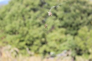 クモとクモの巣の写真素材 [FYI00223103]
