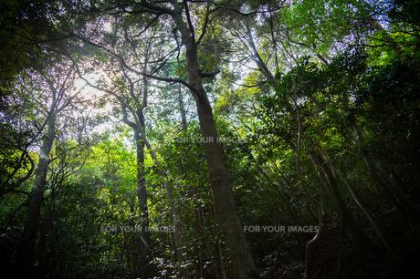 森林の素材 [FYI00223387]