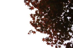 空の秋の素材 [FYI00223649]