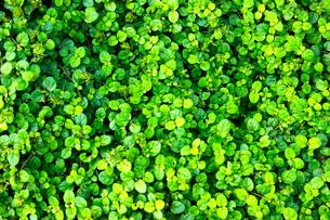 葉の群生の素材 [FYI00223714]