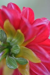 花の後ろ姿の写真素材 [FYI00223833]