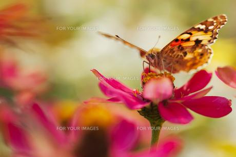 花の国の虫たち11の素材 [FYI00224086]